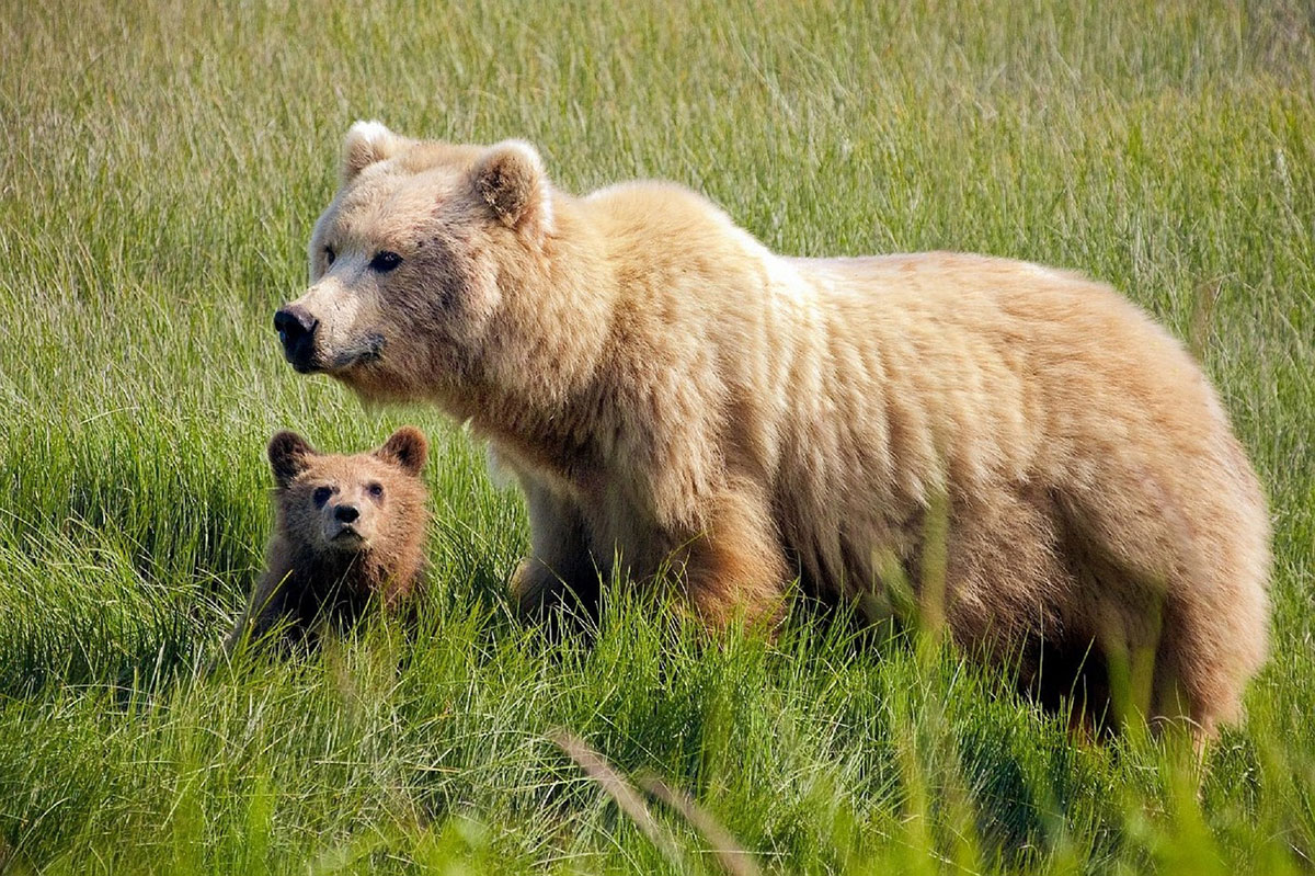 The Gift of the Mama Bear