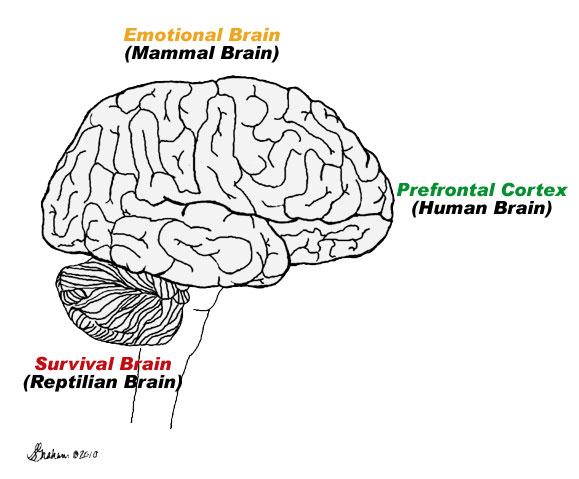 brain-stoplight-rebecca-thompson-hitt
